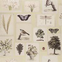 Botanical Buff